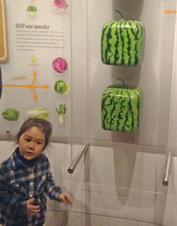 New York museum\'s \'Global Kitchen\' exhibit shows how food is ...